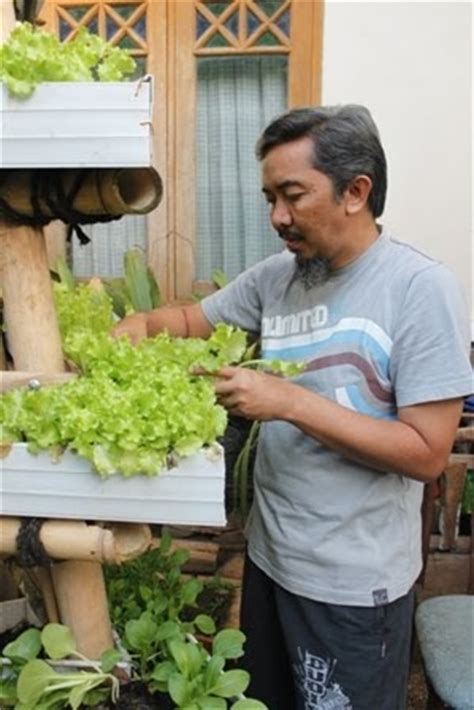 Harga Bibit Sayur Kangkung berkebun yuuk berkebun sayur di halaman
