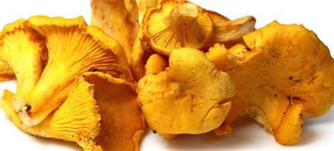 come cucinare i funghi finferli finferli 10 ricette per cucinare i funghi quot gallinacci