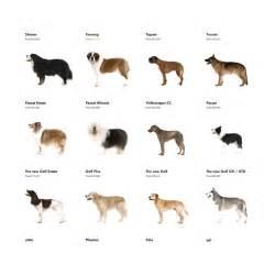 pics photos top 10 dog breed top 10 dog breeds of 2013