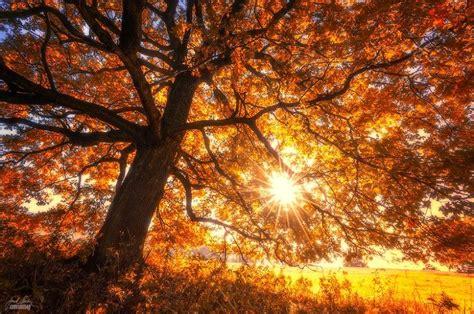 autumn rubber sts musim antique decor direct de