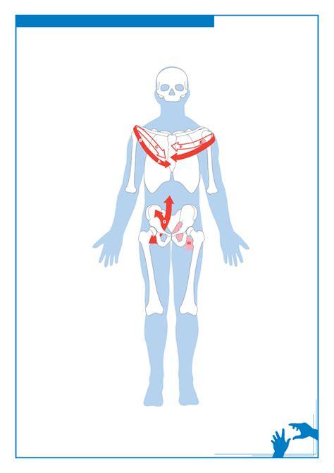 cadenas musculares tronco kinesis neuromuscular