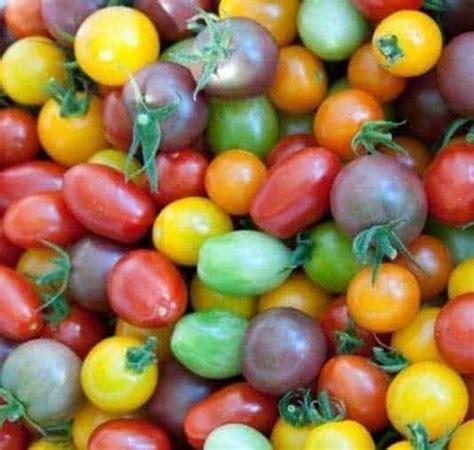 Jual Bibit Anggur Rainbow jual bibit unggul benih tomat rainbow mixed bibit