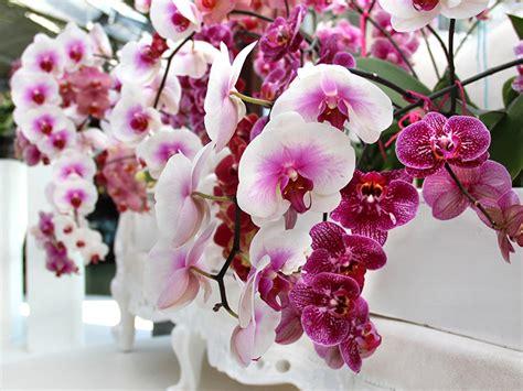 Orchideen Deko Ideen by Deko Mit Orchideen Moderne Ideen Ideen Top