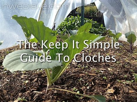 simple guide  cloches northwest edible life