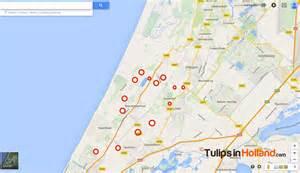 fields in map weekly flower update week 17 tulips in