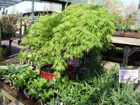 garden centre  wareham dorset holme  gardens