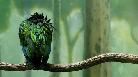 green colored bird wallpapers hd wallpapers id