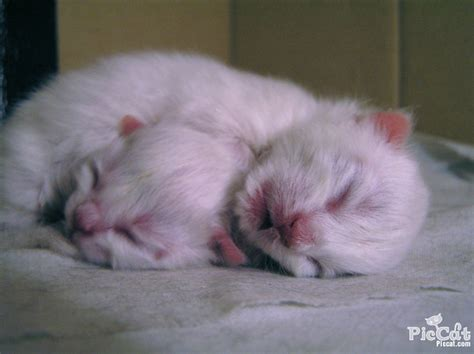 newborn kittens love seeks the advice of those who know better