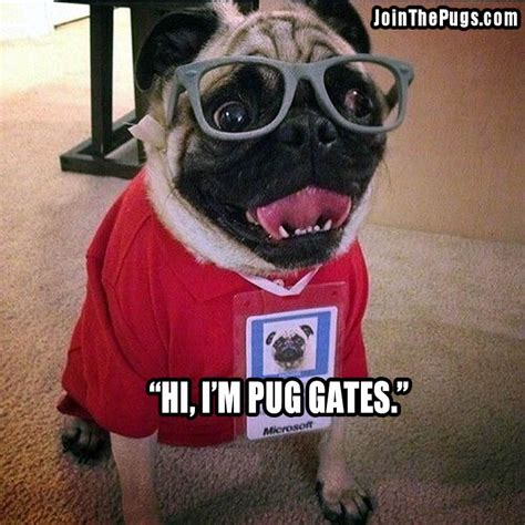 how smart are pugs join the pugs gt smart pug