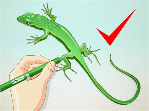 lizard images how to draw a lizard with pictures wikihow