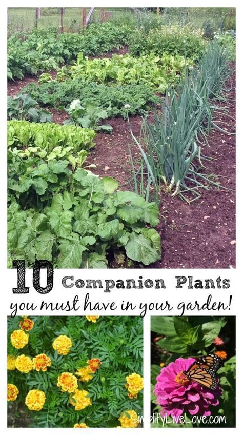 Companion Plants Vegetable Garden 17 Best Images About Garden Flower Ideas On