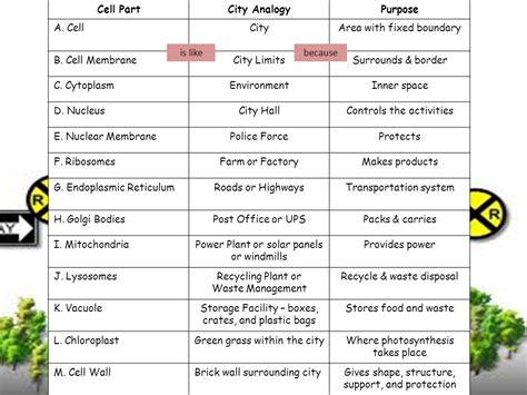 creating analogies worksheet think of a city how does it operate who protects the city