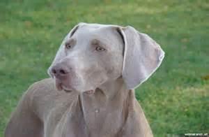 Tag for hunderassen mit bildern und beschreibung litle pups