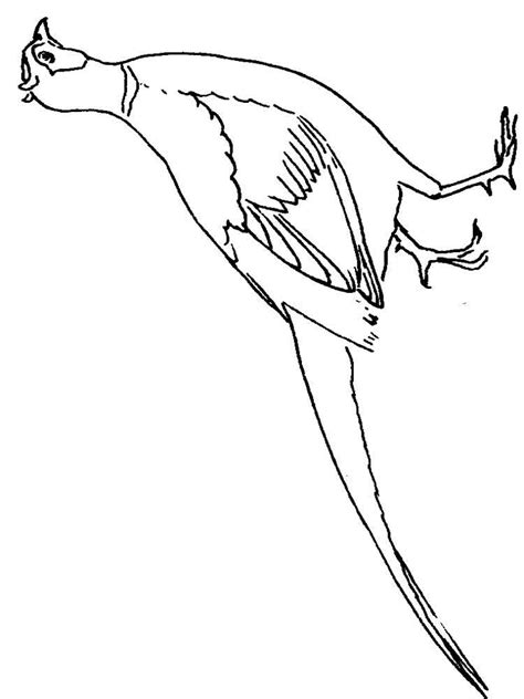 coloring images pheasant coloring pages and print pheasant