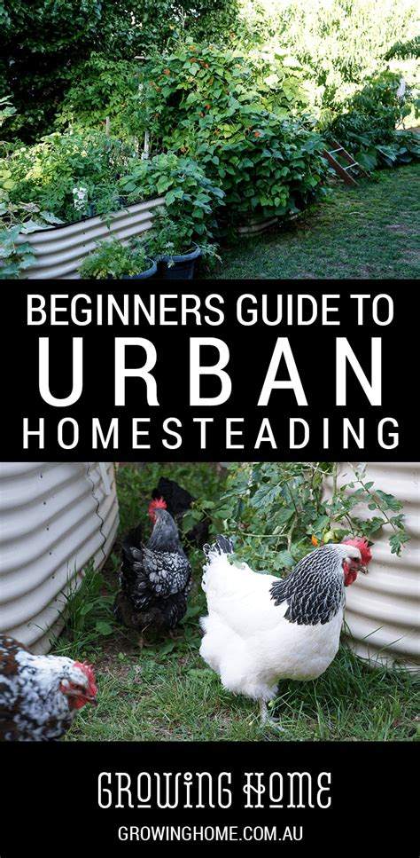 homesteader s guide to basic carpentry skills homesteading beginner s guide to urban homesteading growing home