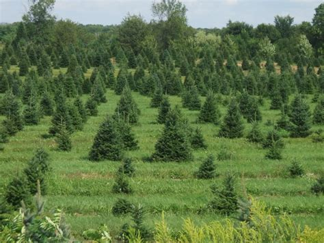 the list of rochester u cut christmas tree farms