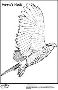 hawk coloring pages hawk coloring pages team colors