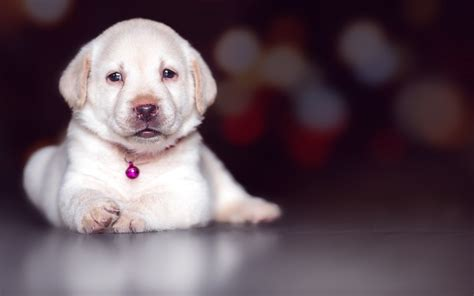 alkaline phosphatase high in dogs has elevated alp dogs health problems