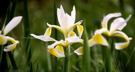 peppino fiori bruno brillante azienda polverino