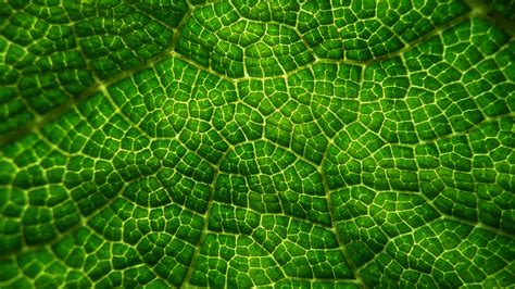 pattern bush in leaf green free images leaf flower foliage pattern green