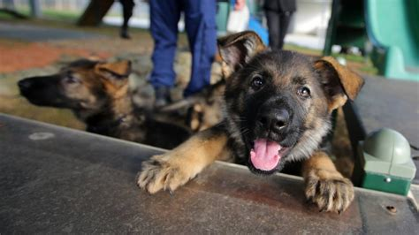 theme names for a litter of puppies photos sick kids to name the latest litter of police