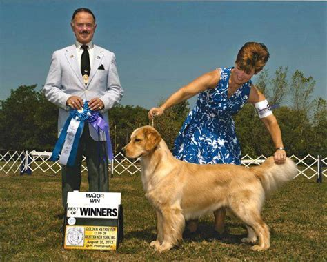 janice provenzano golden retrievers golden images photography gallery poeticgold farm