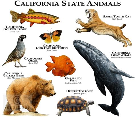 animal ship ca interesante saber vinculos state animals of california line art and full color