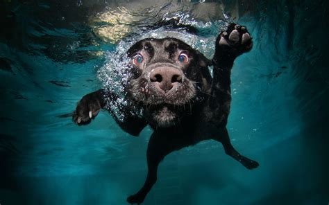 underwater dogs nature animals water underwater bubbles muzzles legs swimming wallpapers