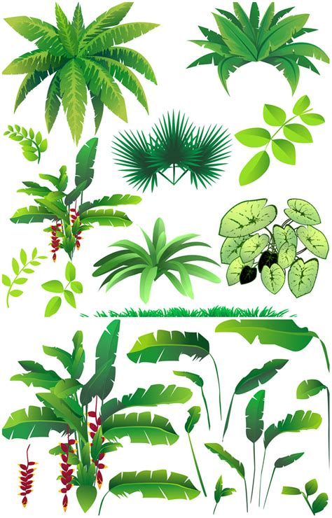 rainforest tree template rainforest plants vector vector graphics