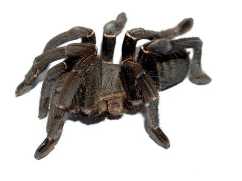 Tarantula Heat Mat by The Best Tarantula Heaters Keeping Pets