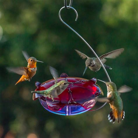 Water Feeder bird water feeders for cage birdcage design ideas