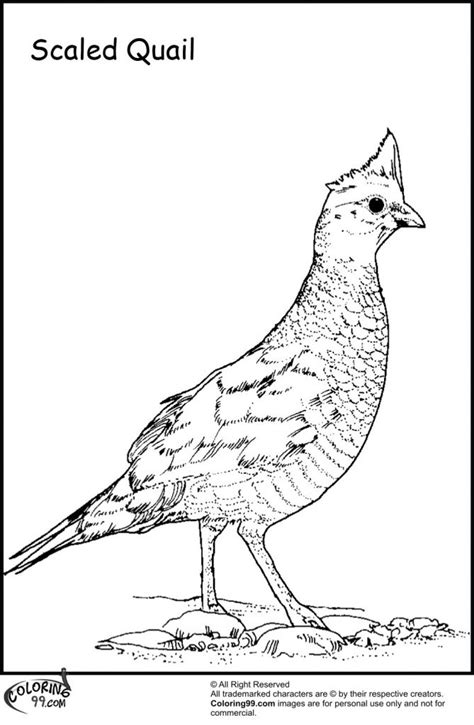 Coloring Page Quail by Quail Coloring Pages For Preschool Preschool And
