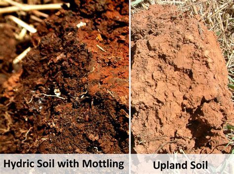 How to Identify Hydric Soils in 3 Easy Steps   Lorenz's OK