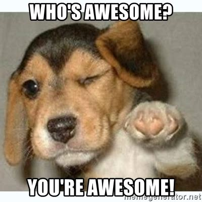 whose awesome you re awesome who s awesome you re awesome bump puppy meme
