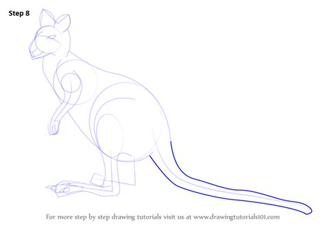 wallaby tutorial learn how to draw an agile wallaby wild animals step by