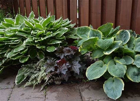 choosing shade plants for zone 7 learn about plants that tolerate shade