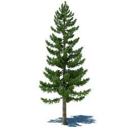 pine tree pine tree 3d max