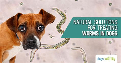 preventing  treating worms  dogs dogs naturally