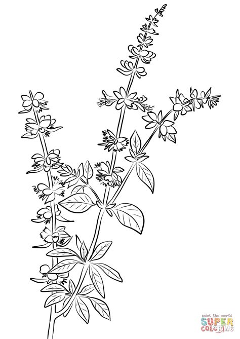 herb garden coloring pages exciting graphic collection of herb coloring pages ideal