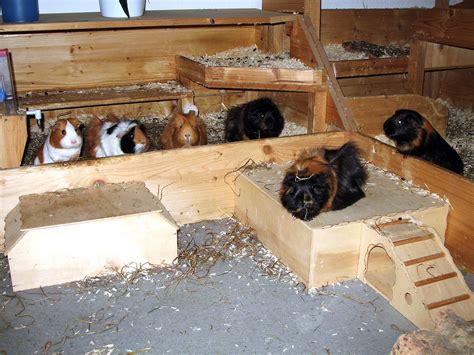 meerschweinchen auslauf wohnung der k 228 fig meerschweinchen