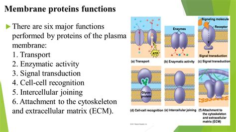 4 proteins in cell membrane 1 cell membrane structure and function 2 movement