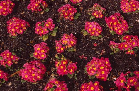 fiori spagnoli marco cavallini immagini dalla spagna