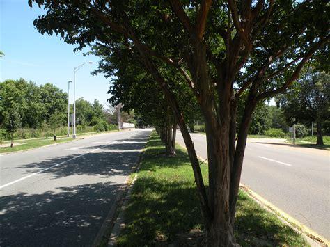 city tree richmond va gt works