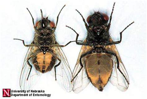 horse flies in house horsefly vs house fly www pixshark com images galleries with a bite