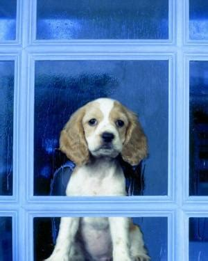 puppy in the window in the window