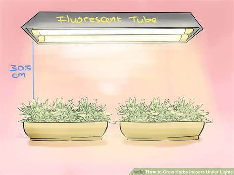 growing herbs indoors under lights herbs to grow indoors 10 healthy herbs you should grow