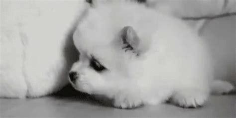 sleepy gif sleepy puppy gif sleepy dogs discover gifs