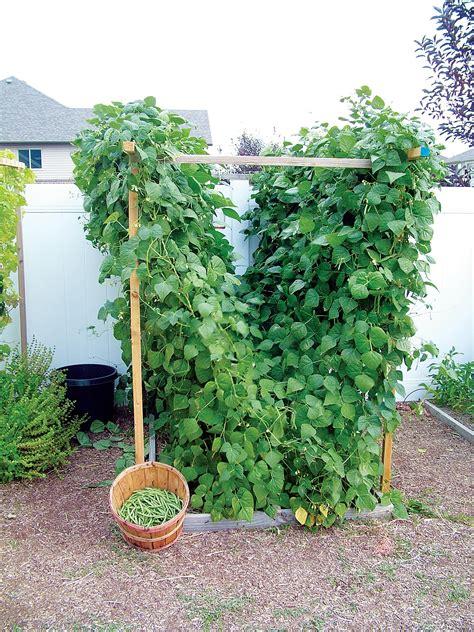 Ideas For Trellis In Garden Garden Trellis Ideas To Mesmerize Your Garden Look Home