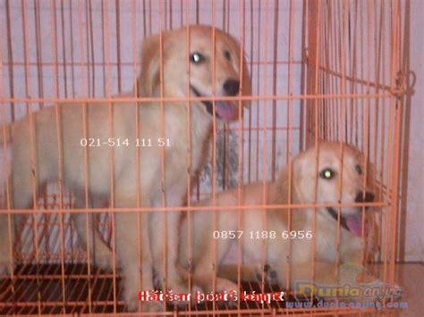 Jual Kandang Pagar Murah Meriah dunia anjing jual anjing golden retriever dijual