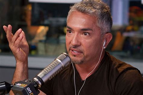 Randy Jackson And 9 Lives Team Up For Cat Adoptions by 70 Best Cesar Milan Images On Whisperer